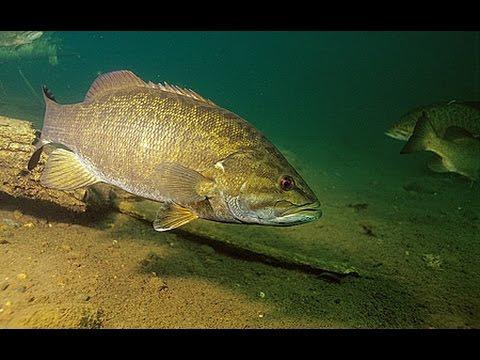 Smallmouth bass fishing tips youtube for Good bass fishing spots near me
