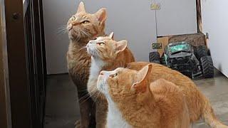 감금된 고양이들 (우리에게 자유를 달라)