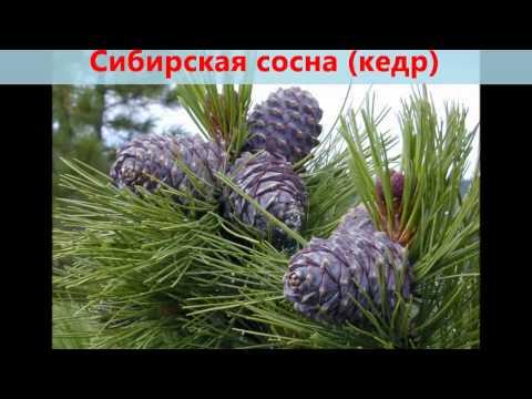 Редкие и исчезающие растения Пермского края Статьи