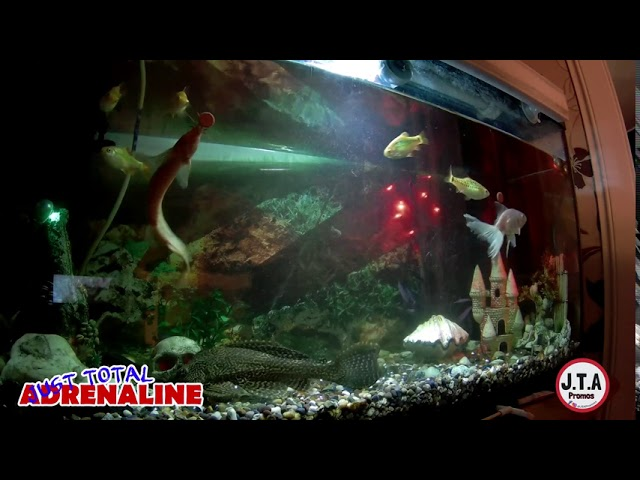 Fish Swimming - 4K Quality Video of fish swimming in our tropical tank @JTAPromos - JTAPromos.net 4