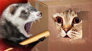 Cover images STRANGE DAY FOR 😻 Cats   Awesome Funny Pet Animals