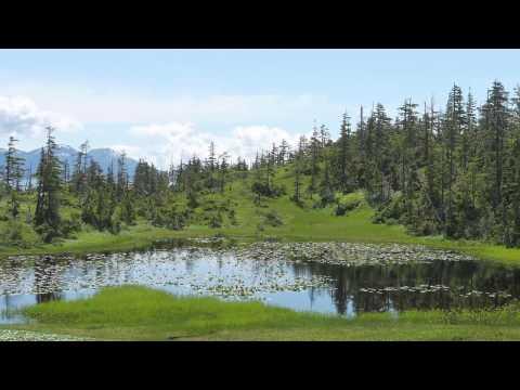 Venture to Prince William Sound. Part 2