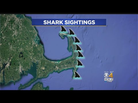 13 Reported Shark Sightings Off Cape Cod In A Week - YouTube on