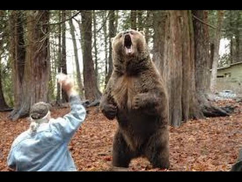 "Big Bend National Park ""Up Close"" Bear Encounter - YouTube"