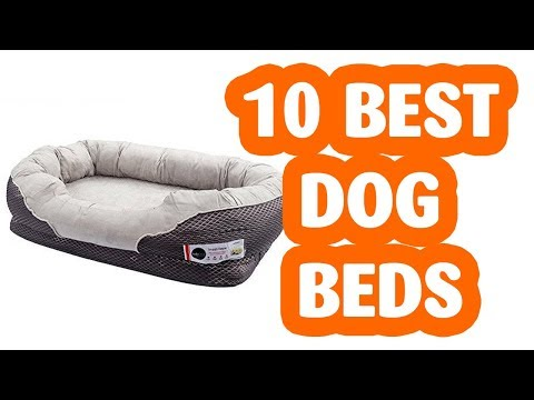 10-best-dog-bed-.-the-best-dog-beds-in-2019