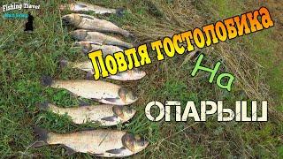 Толстолоб на фидер/толстолобик клюет на опарыш/рыбалка на толстолоба