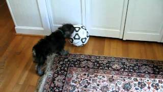 Bailey Playing With A Soccer Ball