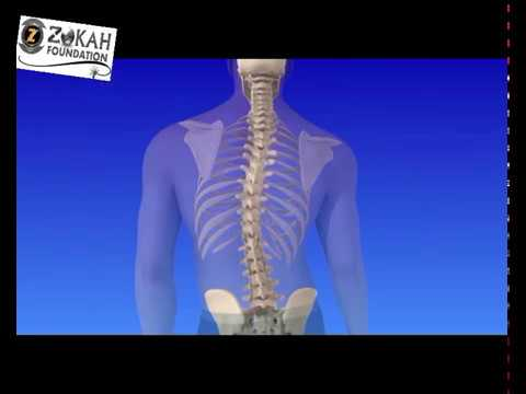TulangTulangmerupakan bagian tubuh yang vital. Tanpanya, tubuhTulangTulangmerupakan bagian tubuh yan.