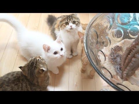 고양이 문어요리 먹는 날