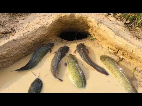 Thumbnail: Amazing Muddy soil Hole Trap - Smart Man Build Fish Trap By Muddy soil- Get Alot of Fish 100%