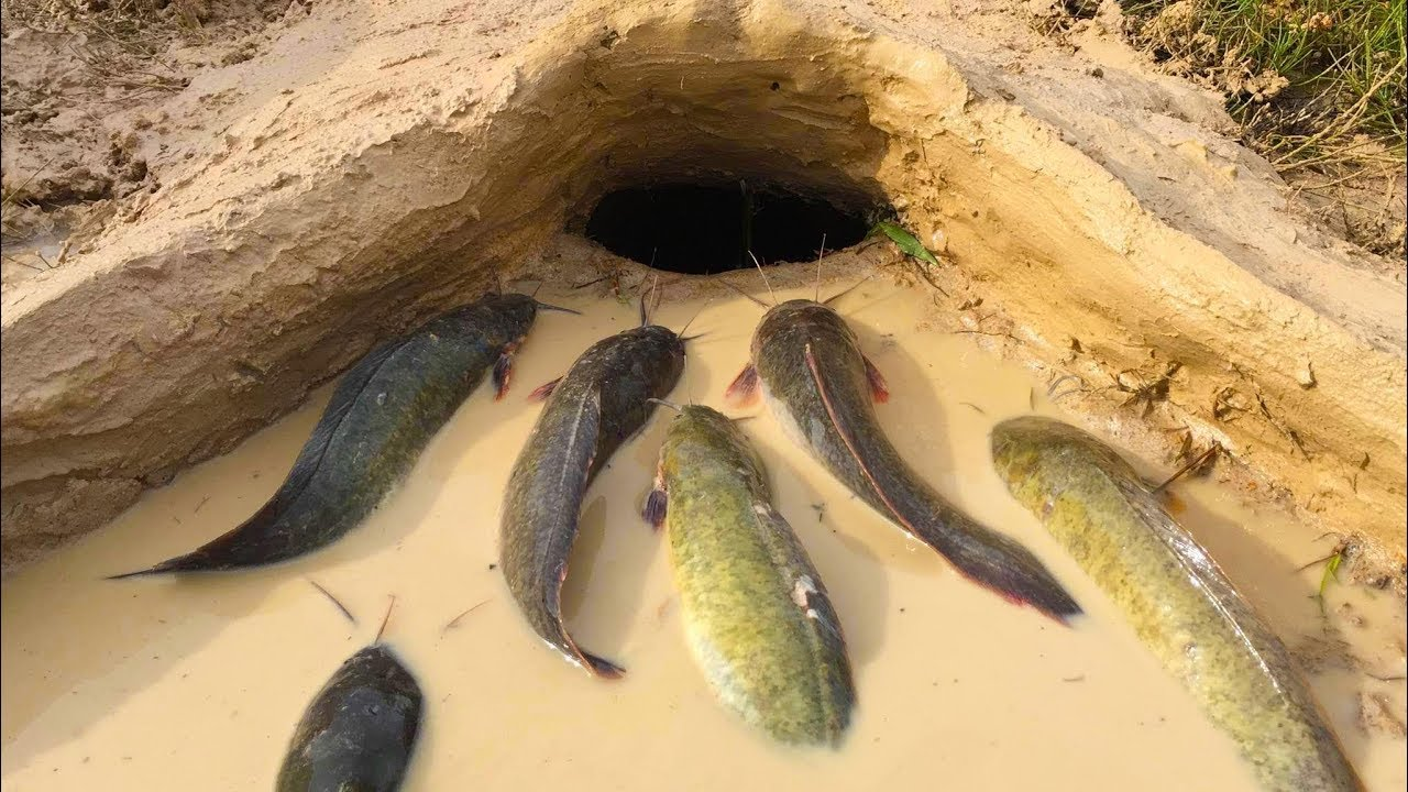 Amazing muddy soil hole trap smart man build fish trap for Are fish smart