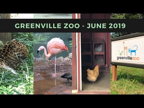 Greenville Zoo - June 2019