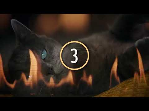 Karaoke Cat - Hungry Eyes - Sheeba UK TV Advert