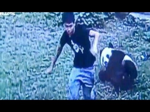 Zoo Visitor Wrestles Panda in east China
