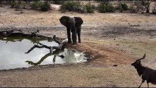 Djuma: Elephant blows water at Nyala bull - 08:28 - 10/10/18