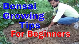 Plants growing Tips for Bonsai lovers
