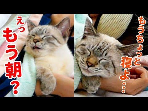 布団で一緒に寝てくれる猫がかわいすぎて起きたくなくなっちゃいました…