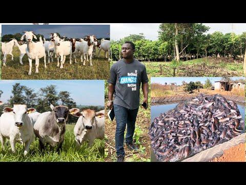 Ghana: Starting a farm from Zero | 30 June 2021
