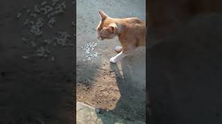 Funny   animals   video