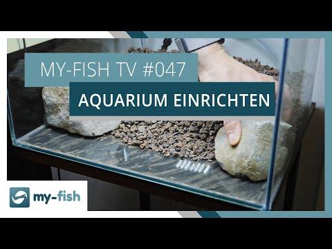 Ein neues Aquarium einrichten | my-fish TV