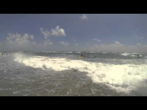 Dog surfing in Jupiter