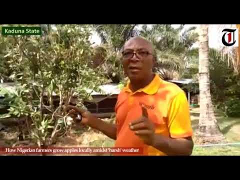 Kaduna Apple Farmer