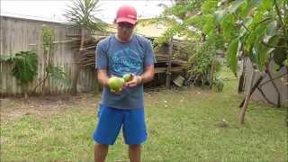 Picking Fruit From the Chocolate Pudding Tree - An Amazing Fruit Tree