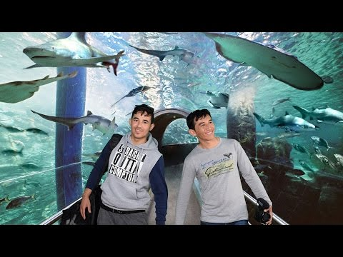 Melbourne Attractions | Melbourne Aquarium Tour | Experience it in 4K | VLOG #0008