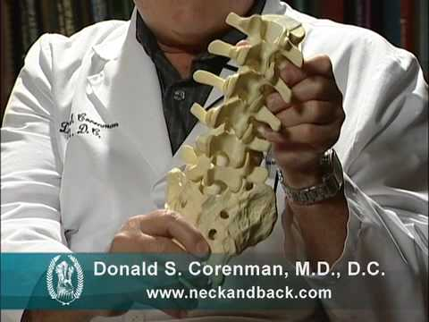 Understanding how the Lower Back Functions   Anatomy of the Lumbar Spine   Colorado Spine Expert