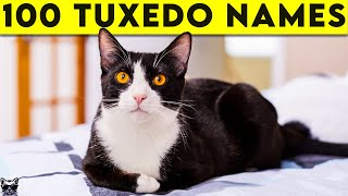 Tuxedo Cat Names  100+ Names For Your Black and White Cat