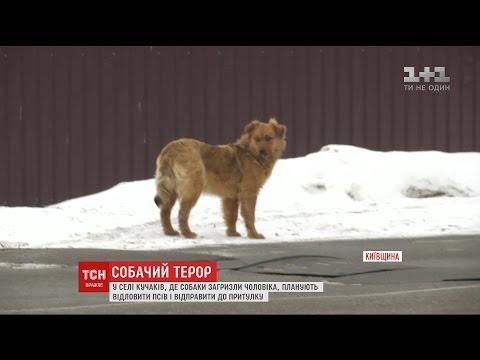 Собаки продовжують тероризув...