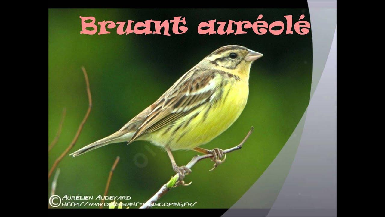 Les oiseaux de belgique youtube for Oiseaux de nos jardins belgique