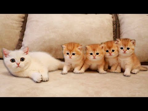 Kitten Coco MET her four Brothers from YouTube · Duration:  12 minutes 48 seconds