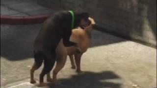GTA 5 собаки тоже могут веселиться
