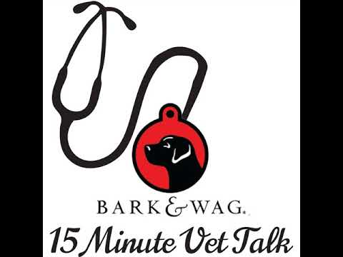 A big no to giving your dog aspirin with Dr. Laura Brown