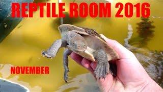 November Reptile Room Update 2016