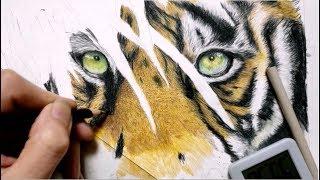 色鉛筆の塗り方の手数が増えた感じ('ω')虎がデカくて疲れたわー ーーー...