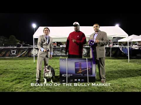 ABKC Show Results: BATTLE OF THE BULLIES III - Las Vegas 2014