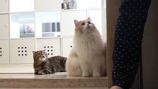 집에 찾아온 낯선 사람을 만난 고양이들