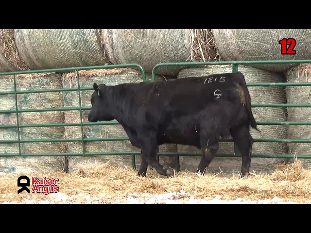 Kaiser Angus Ranch Lot 12