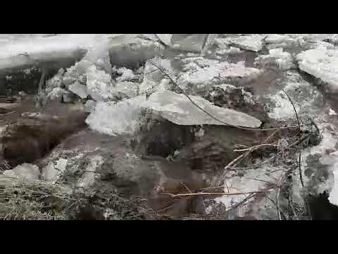 Лёд тронулся, спасайте