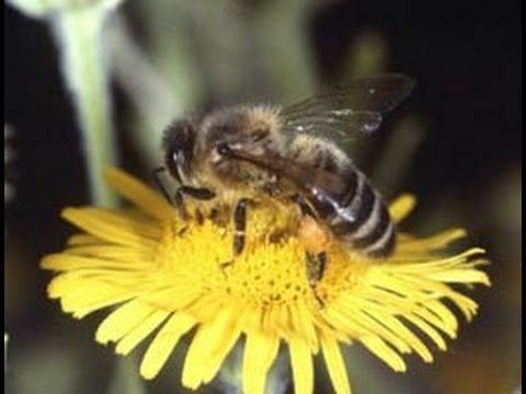 Dorchester County Bee Killing Pesticide Debacle