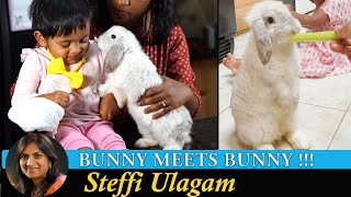 Bunny meets Bunny | Hoppy is Home | Steffi Ulagam