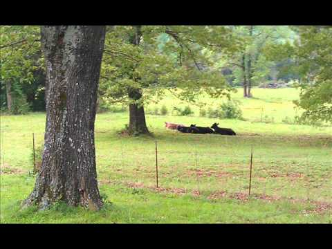 sold reduced 188 900 beautiful home with land for sale 161 rock hollow road hector arkansas
