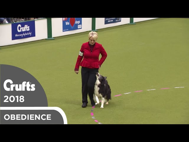 Obedience - Bitch Championship - Part 20 | Crufts 2018