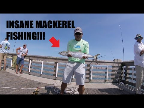 INSANE Spanish Mackerel Bite!! Cobia, Triggers, Spades!! - OBX, NC (jennettes Pier)