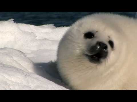 Cancel The 2010 Commercial Seal Hunt
