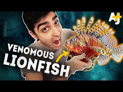 Why Eating This Fish Could Save Coral Reefs | AJ+