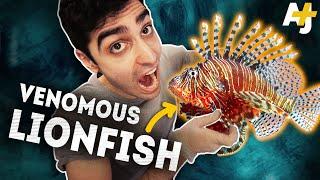 Why you should eat VENOMOUS lionfish | AJ+