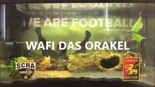 WAFI DAS ORAKEL tippt SCR Altach gegen FC Admira Wacker Mödling 02/2015